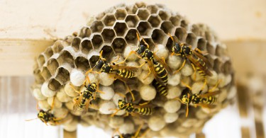 the-hive-335984_960_720