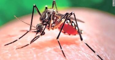 160128185001-zika-mutant-male-mosquitos-mclaughlin-pkg-00020830-large-169
