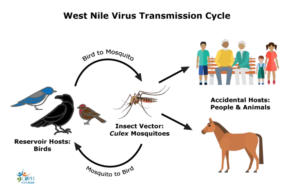 west nilo virus