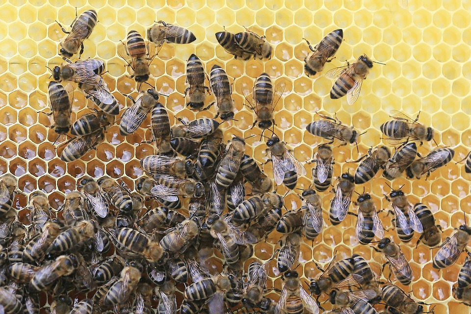 bees-2438361_960_720