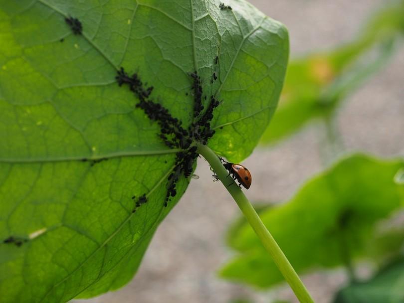 ladybug-1271997_960_720